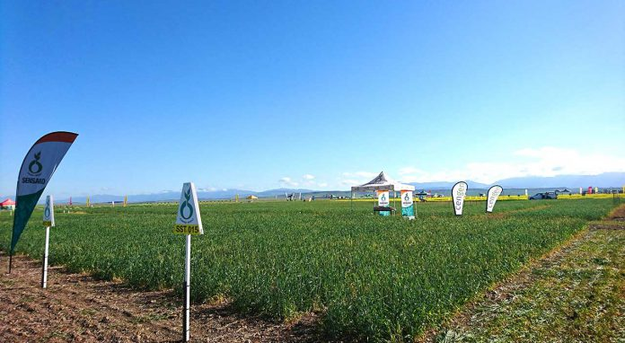 Linking the lab to the wheat field: CenGen attends SSK producers' day